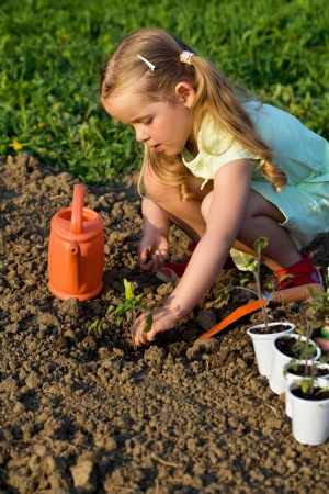 nursling: Little girl planting tomato seedlings in spring time - growing your food