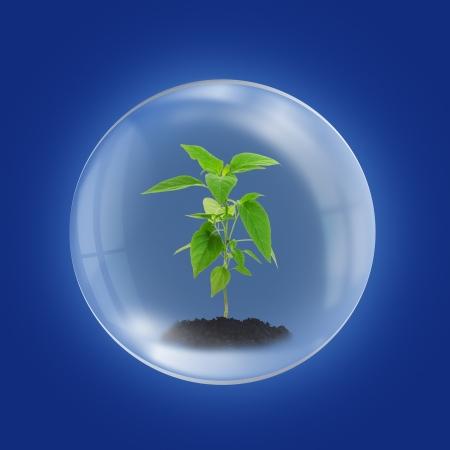 esfera de cristal: Medio Ambiente concepto con plantas j�venes en la esfera de cristal
