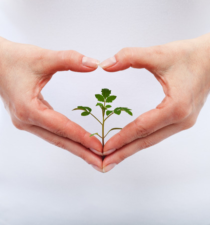 shaped hands: Love and protect nature concept with seedling in woman heart shaped hands