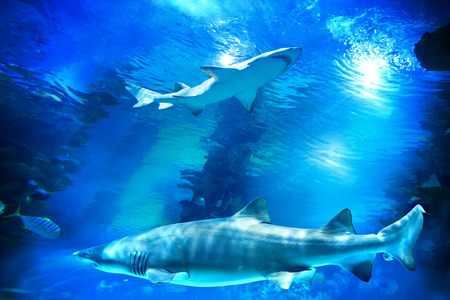 blue fish: Sharks and small fish swimming in aquarium - deep blue shades Stock Photo