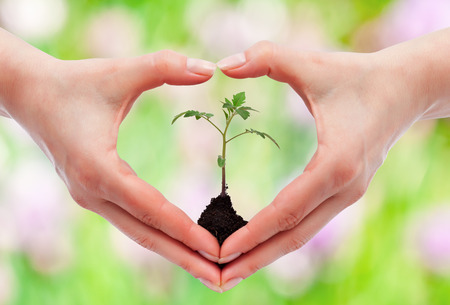 environmental awareness: Environmental awareness and protection concept - woman holding young seedling