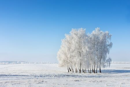 Frosty trees on the snowy winter field in a cold sunny day