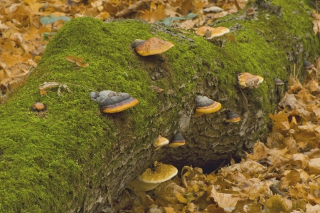 Tree with mushrooms photo