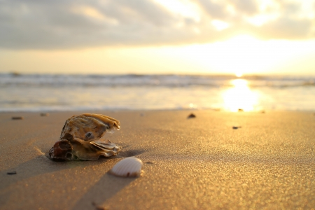 Sea shells in the golden sand at the sunrise  photo