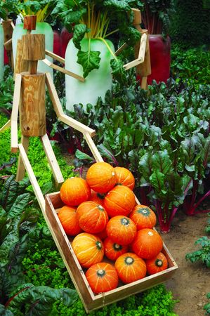 Pumpkins and other vegetable in garden Stock Photo - 3215352