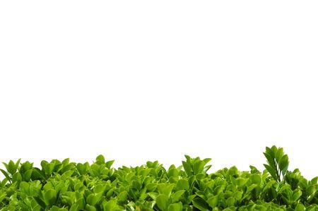 Spring shrub leaves border background