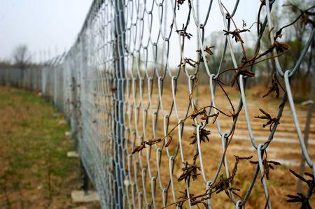 netting: wire netting Stock Photo