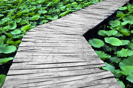 trestle: Wooden trestle among the lotus in lake
