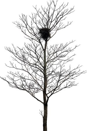 Tree with nest isolated on white background
