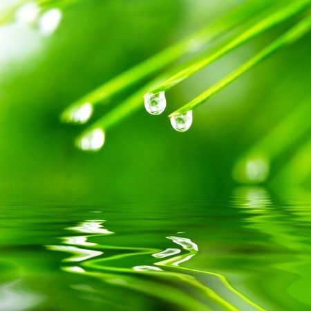 Pine needle with dewdrops in morning Stock Photo - 3833274