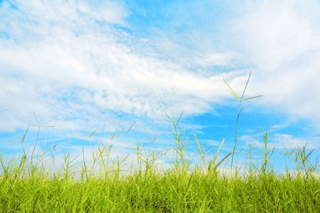 Green grass and blue sky Stock Photo - 5455643