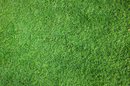 Green grass background of soccer field  Stock Photo