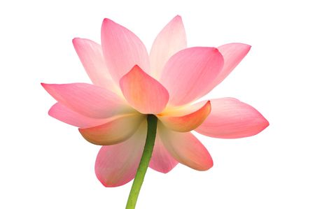 Isolated lotus with path Stock Photo