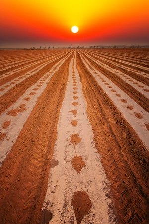 Sunrise over the cotton field photo