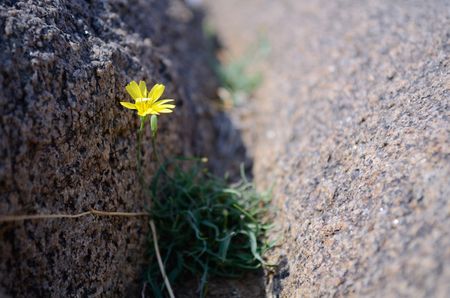 cleft: Wildflowers in a rock crevice