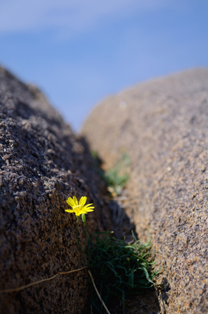 crevice: Wildflowers in a rock crevice