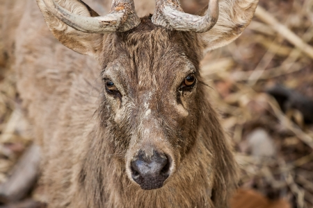 deer in chiangmai zoo Thailand Stock Photo - 16537008