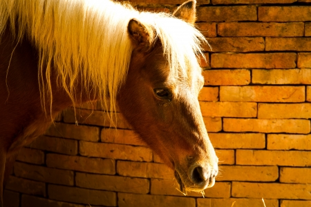 a horse in nightsafari chiangmai Thailand photo