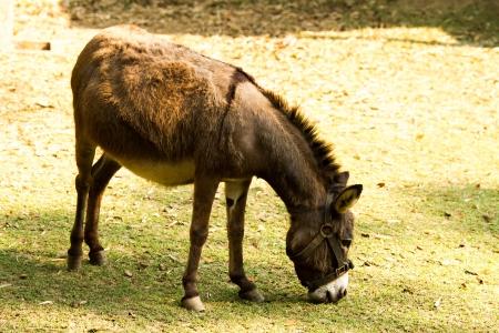 donkey in nightsafari chiangmai Thailand
