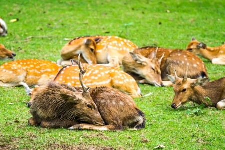 deer in nightsafari chiangmai Thailand photo