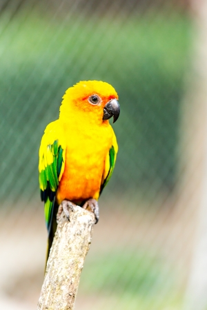 parrot in nightsafari chiangmai Thailand photo