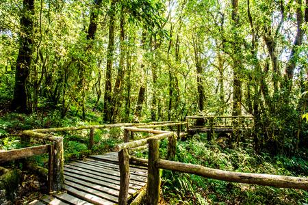 path in woods doi inthanon national park, chiangmai Thailand