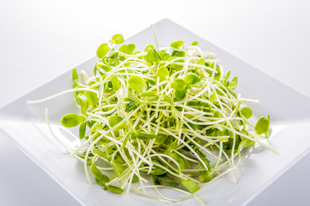 sunflower sprouts isolated on white background Stock Photo