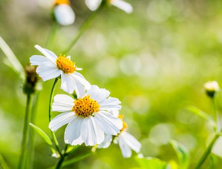 closeup grass flower Stock Photo