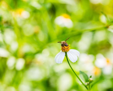 closeup grass flower photo