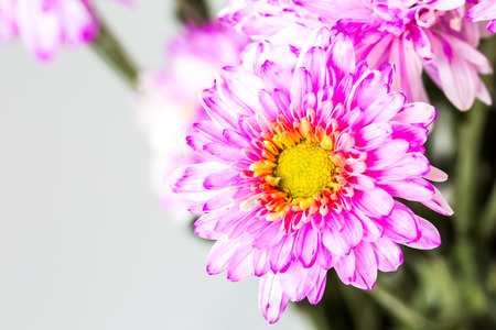close up spray flower, on white background. photo