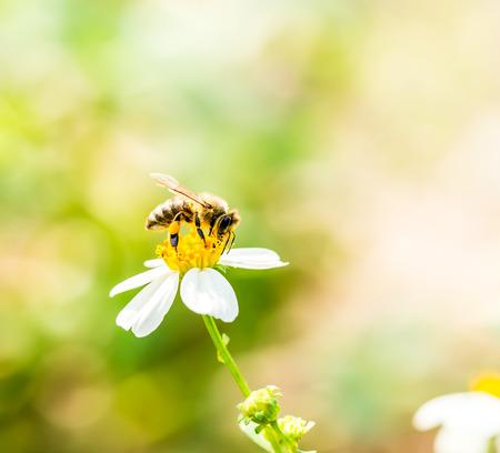 bee eat pollen of flower Stock Photo