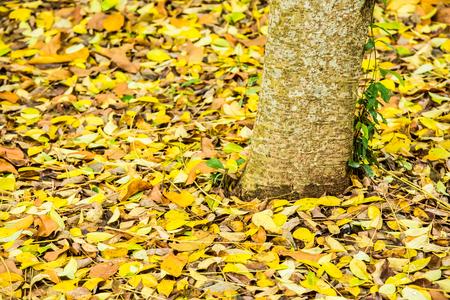 leaf fall on ground