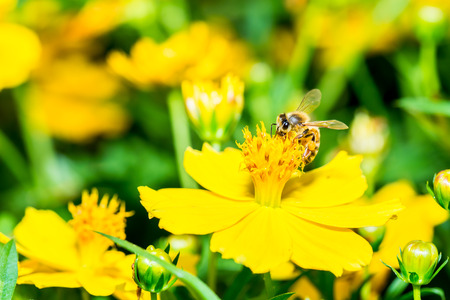 pollen: Bee eat pollen