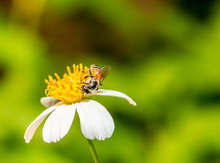 bee on flower: Bee eat pollen of flower Stock Photo