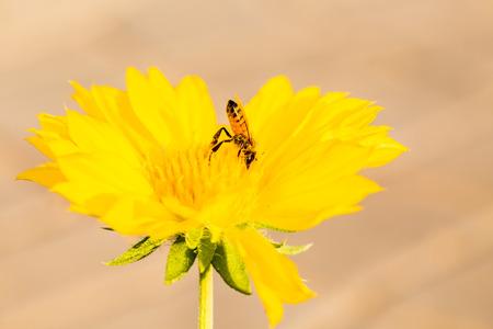 pollen: bee eat pollen flower