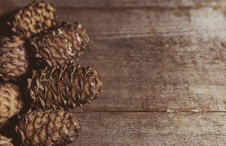 Cedar cones on a wooden background. Old vintage boards. The view from the top. Copy space. Imagens
