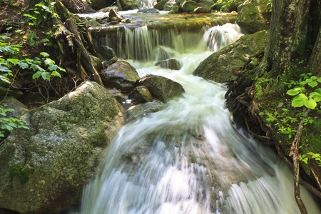 channeled: Water channeled between rocks and roots just below Beaver Meadow Falls in the Adirondack State Park in New York