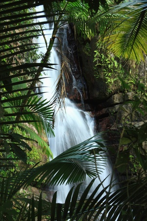 Beautiful La Mina Falls seen behind palm leaves in the El Yunque rainforest in the Caribbean National Forest, Puerto Rico