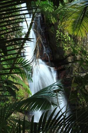 national forest: Hermosa La Mina Cataratas visto detr�s de las hojas de palma en el bosque tropical El Yunque en el Bosque Nacional del Caribe, Puerto Rico