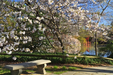 A bench on the celebrity path at the Japanese Hill-and-Pond Garden at the Brooklyn Botanic Gardens on a sunny Spring morning. Stock Photo - 13185994