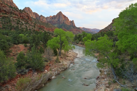 Cottonwood trees one the Virgin River with The Watchman in the background in ZIon National Park, Utah photo