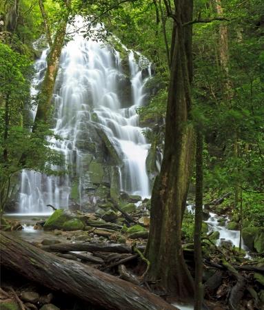 Seasonal waterfall seen through the forest at Rincn de la Vieja National Park