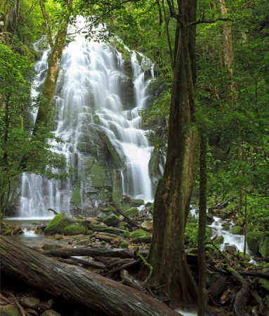 vieja: Seasonal waterfall seen through the forest at Rincn de la Vieja National Park