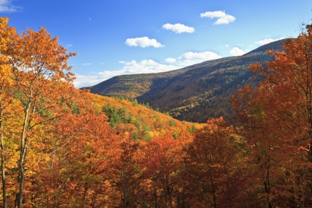Colorful autumn foliage in Kaaterskill Clove in the Catskills Mountains of New York