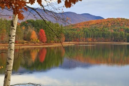 Soft morning light on a birch tree on the shore of Cooper Lake near Woodstock, NY Standard-Bild