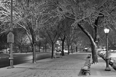 street lamp: Black and white picture of the walkway and bike path during November Noreaster on Eastern Parkway in Brooklyn, NY