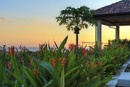 Sunset at a tropical garden and coconut tree in a villa overlooking Tamarindo and Pacific Ocean in Guanacaste, Costa Rica (HDR)