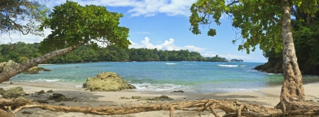 Tree roots and driftwood line the south end of Playa Manuel Antonio in Manuel Antonio National Park, Costa Rica photo