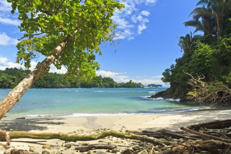 costa rica: An askew shade tree on the south end of Playa Manuel Antonio in Manuel Antonio National Park, Costa Rica