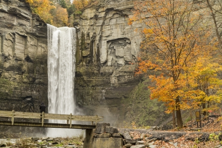 A viewing bridge and tall autumn maple tree set off the cliffs of Taughannock Falls in Taughannock Falls State Park, NY 版權商用圖片